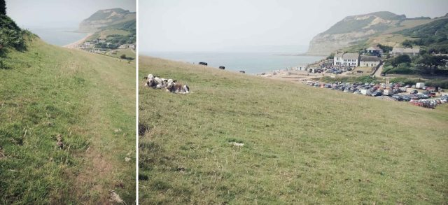 Dorset Blog-32b