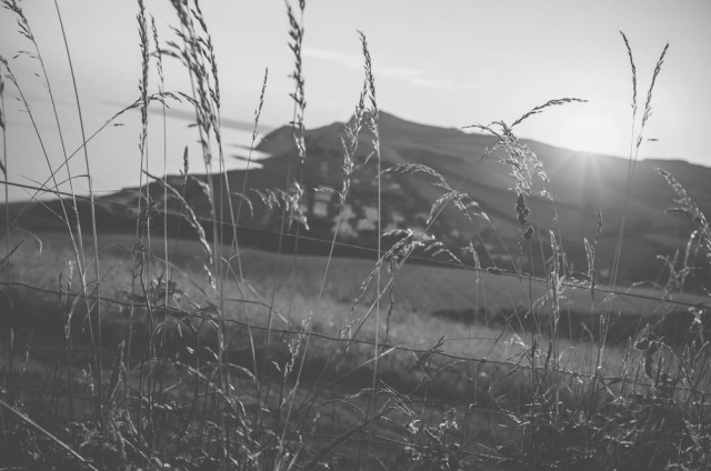 Dorset Blog-4