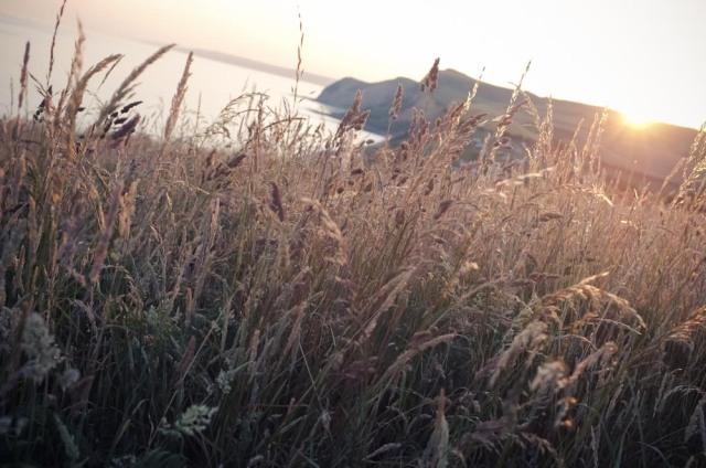 Dorset Blog-7
