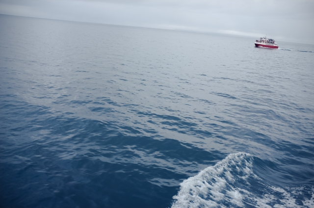 Reykjavík whale watching on Andrea