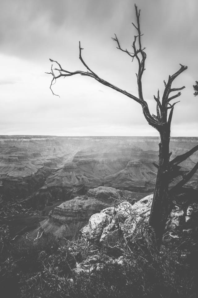 Grand Canyon - Moody Tree